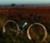 The Shadow  bike photo 3